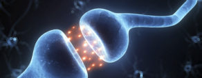 DISTANSUTBILDNING: Kommunikation och Interpersonell neurobiologi - Vi lär andra